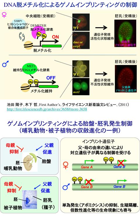 イン プリンティング ゲノム 3Dバイオプリンティング