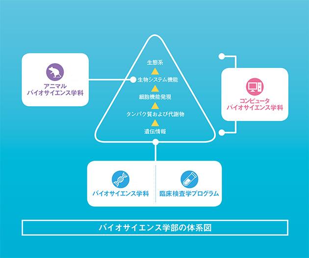 バイオサイエンス学部の体系図